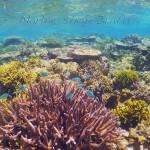 世界に誇れる珊瑚礁、ここはやっぱり竜宮城だね!!