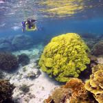 これぞ、美ら海の珊瑚礁!!
