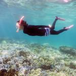 珊瑚が危険な・・・