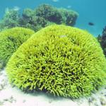 珊瑚礁の現状