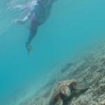 海亀、サンゴ、珊瑚礁!!
