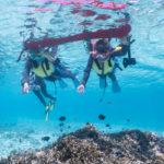 サンゴ、魚、海亀