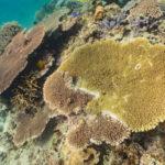 幸せ珊瑚礁