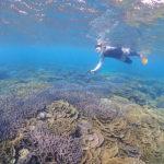 綺麗な珊瑚礁が見たい!!