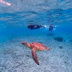 海亀を一生分・・・